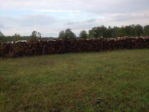 Dry seasoned firewood