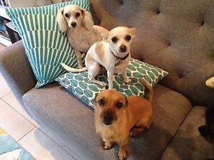 SMALL PETS - HOME BASED PET CARE - PET SITTING Trinity Beach Cairns City Preview