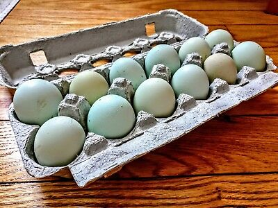 12 Green Blue Olive Hatching Eggs - Easter Eggers Olive Eggers Ameraucanas