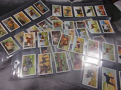 Full Set of 48 Gallaher DOGS 2nd Series 1938 Cigarette Cards