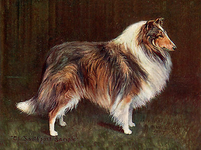 ROUGH COLLIE OLD NAMED CHAMPION DOG ON LOVELY GREETINGS NOTE CARD