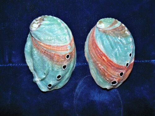 """TWO (2) GREEN ABALONE SEA SHELLS, BEACH DECOR CRAFT REEF 2-1/4 to 3"""""""