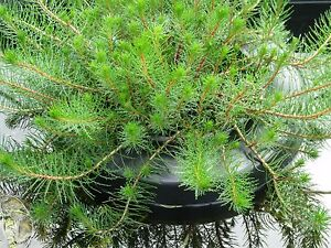 Garden pond water plant floating ring island holds 20cm for Floating plant pots