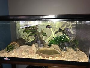 Ball Python with cage and full set up