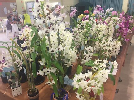 Queensland Orchid Society Show