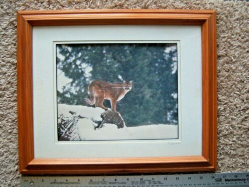 Framed Photograph Mountain Lion Cougar Puma Signed Denomme 8x10 Free Shipping