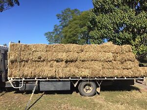Cow hay Forster Great Lakes Area Preview