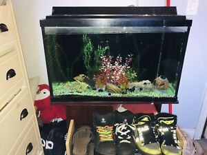 "Fish Tank 32"" + 6 Fish (All Included)"