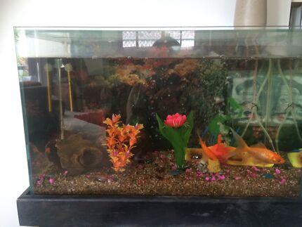 Full fish tank setup !!  Labrador Gold Coast City Preview