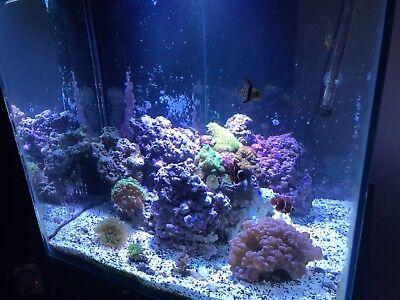60 gallon aquarium (saltwater) full set up and still running. Rodi unit too