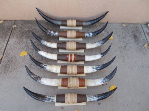 """MOUNTED STEER HORNS NEW COW BULL LONG (ONE SET ONLY) LONGHORN 28"""" to 35"""""""