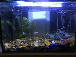 AQUARIUM SPECIALIST(High quality and very good price) Bondi Junction Eastern Suburbs Preview