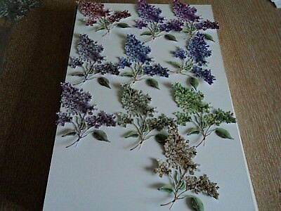 TATTERED LACE BOTANICAL FLORALS DIE CUTS X 10 MIXED COLOURS