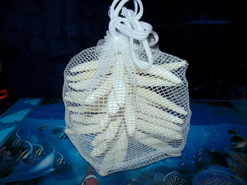 """TEN (10)  6 to 7"""" REAL WHITE PHILIPPINE FINGER STARFISH IN A COLLECTING BAG"""