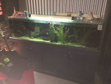 6ft custom made Aquarium with fish and accessories  Marsden Logan Area Preview