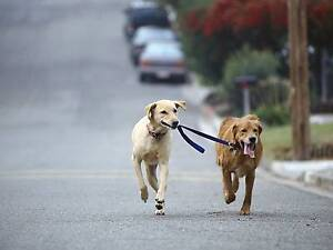 Dog Walking by Qualified Trainer West Hoxton Liverpool Area Preview