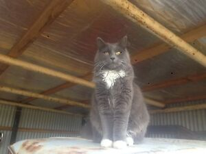 MISSING CAT Huonville Huon Valley Preview