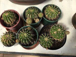Cactus Burwood Burwood Area Preview