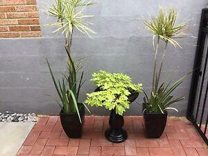 Happy healthy plants in pots Heathridge Joondalup Area Preview