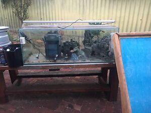Fish tank Bateman Melville Area Preview