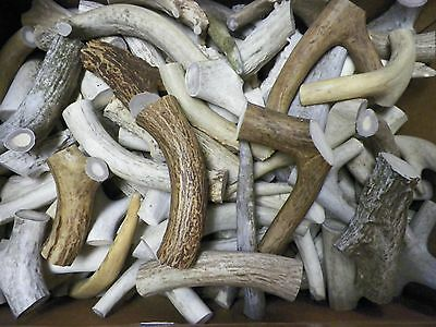 1 Lb Shed Deer Antler Dog Chew Treats Knife Handle Craft