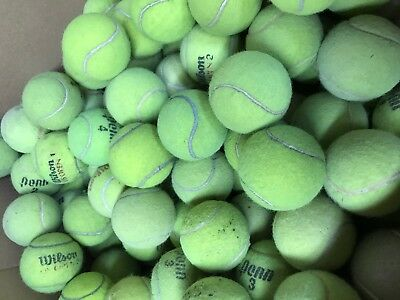 300 Heavily Used Tennis Balls - Free Ground Shipping - Dog Toys