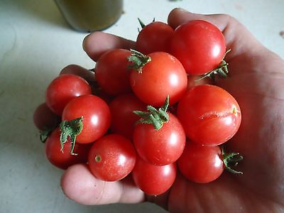 Heirloom Cherry tomato lovers variety pack FREE SHIP + FREE GIFT!
