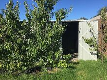 3.5 X 4m X 2.2m high shed must go by may 8th Beaumaris Bayside Area Preview
