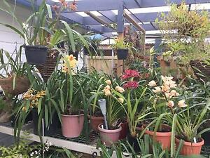 Orchid sales Pascoe Vale Moreland Area Preview