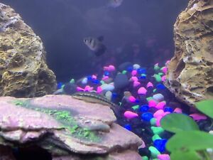 9 Fish and accessories for sale