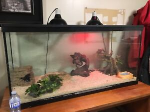Ball python snake and tank