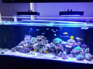Aquarium fish tank 6 foot