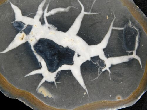 A Lighting Like Pattern! on This Natural Polished SEPTARIAN Nodule 266gr