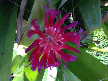 5 Beautiful Healthy Potted plants Kensington Eastern Suburbs Preview