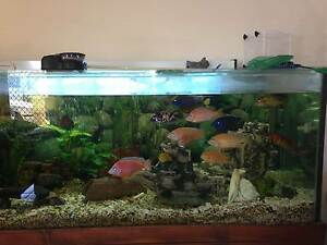 6ft Tank & Stand Bethania Logan Area Preview