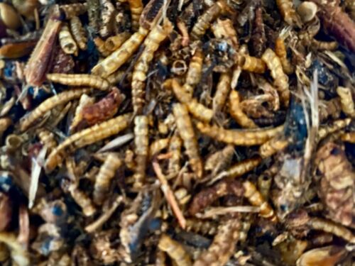 Freeze Dried Mealworms and Mixed Insects