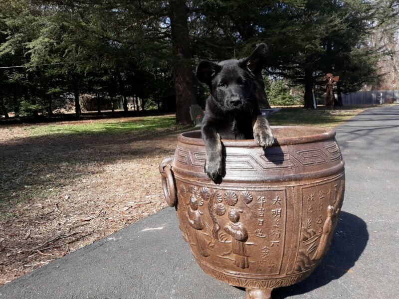 Large Old or Antique Chinese Cast Iron Cauldron Garden Planter