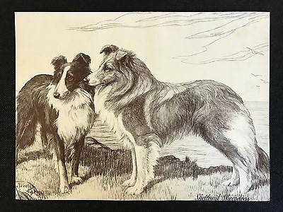 Original 1934 Dog Print / Bookplate - SHETLAND SHEEPDOGS