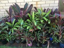 Plant & Garage SALE! Mother's Day weekend SCARBOROUGH Redcliffe Redcliffe Area Preview