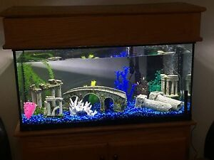 40 gal fish tank with stand