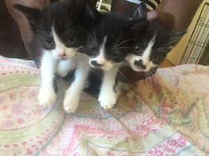 Adopt Cats & Kittens Locally in Toronto (GTA) | Pets