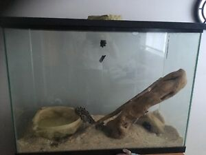 5-6 year old female ball python for sale