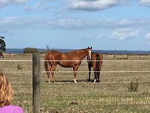Horse Agistment!!! Koo Wee Rup Cardinia Area Preview