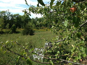 Beautiful 5 Acre lot with woods and field by Trent River Belleville Belleville Area image 4