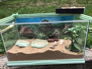 Hermit Crab Tank and Environment