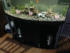 75 gal double bow fish tank