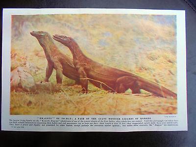 genuine vintage glossy 2 sided print/picture, komodo dragon & frilled lizard
