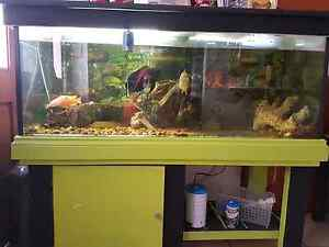 Fish for sell complete Meadow Heights Hume Area Preview