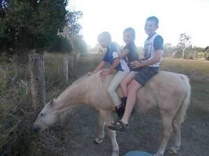Beautiul Palomino Pony Mare Toowoomba Toowoomba City Preview