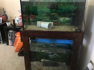 Axolotl plus two fish tanks Hurstville Hurstville Area Preview